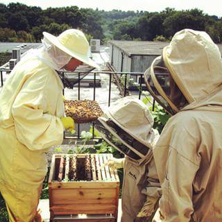 Bee Honey & Wax Extraction Room