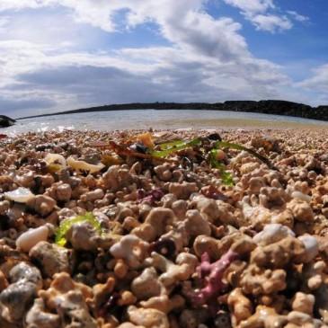 Maërl Documentary of Rare Seabed Habitat
