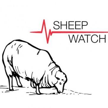 Sheep Watch